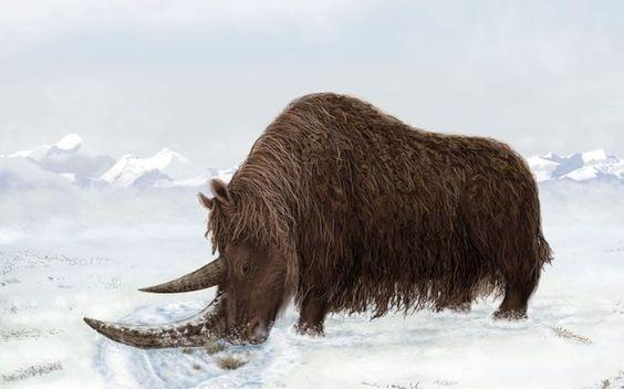 Encontrados no Tibete fósseis de grandes mamíferos da Idade de Gelo