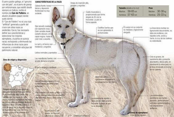 El perro de Palleiro es el guardián de la granja por antonomasia