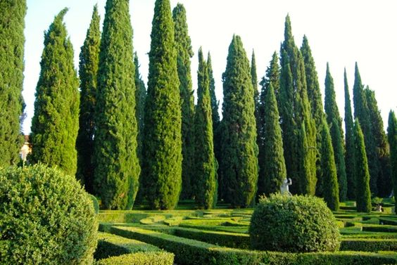 You'd be hard-pressed to find a classic Italian garden more beautiful than the Giusti Garden in Verona Italy, just a short walk from the c...