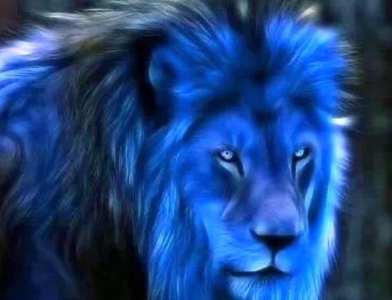 Blue Lions are the best Lions!!
