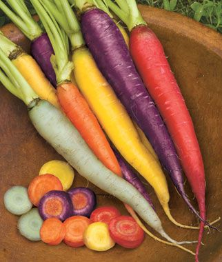 Carrot: Kaleidoscope mix from burpee  direct sown 3/18 - some mauled by groundhogs, some ok.