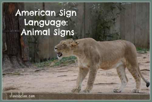 Simply Stavish: American Sign Language Animal Signs for ... - photo#34