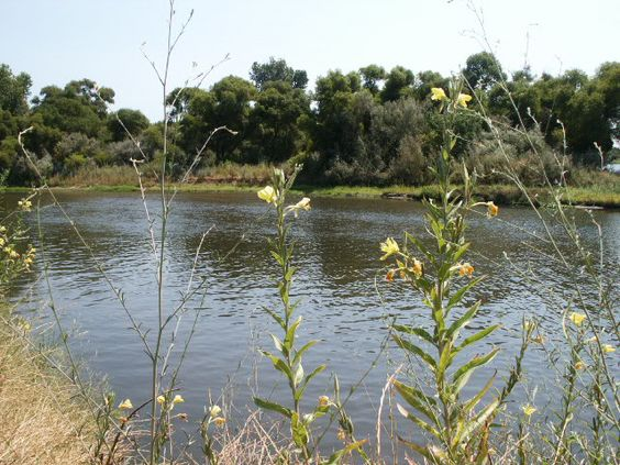 Two Rivers Rv Park Manteca Ca Rv Parks And Camping