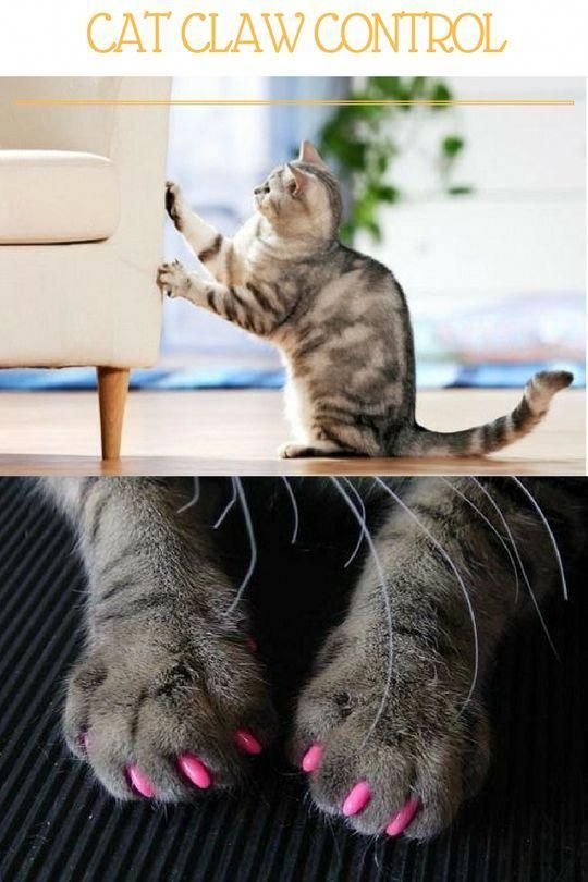 Colorful Soft Cat Claw Control Nail Caps Accessories Products For Cats Cat Claw Covers Cat Care Cat Training