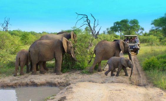 Safari-Lodge im Krüger Nationalpark Südafrika deutsch | travel-friends.com