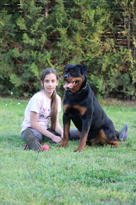 Protection Rottweilers For Sale Nike Is An Fully Trained