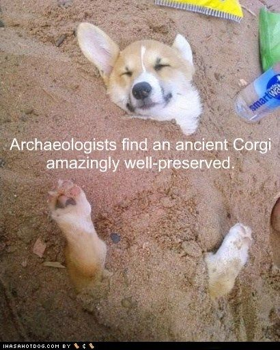 Archaeologists find an ancient Corgi amazingly well preserved!
