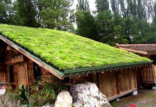 Image Result For Diy Green Roof Extension Uk Green Roof System Green Roof Grass Roof