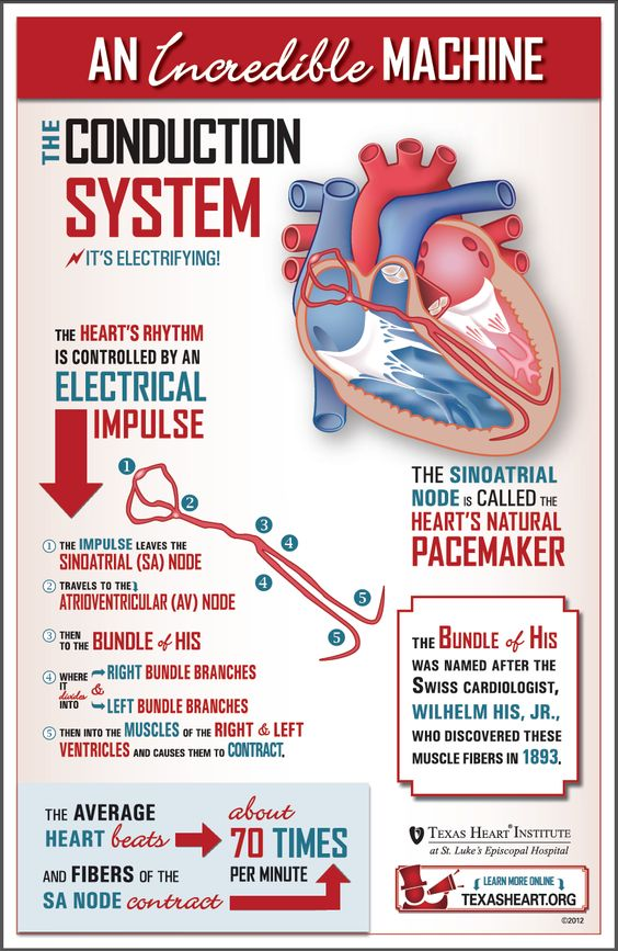 What makes the heart beat? Learn about the conduction system, an incredible machine.: