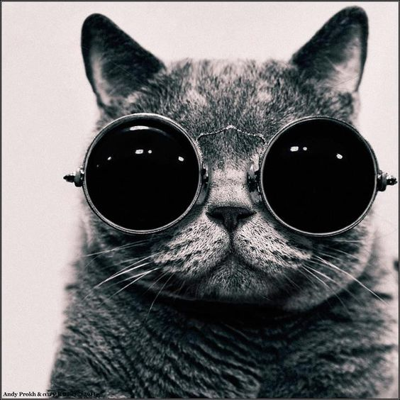 What if I told you...: Cool Cats, Cute Animal, Kitty Cat, Funny Cat, Kool Kat, Steam Punk, Kitty Kitty, Willy Wonka, John Lennon