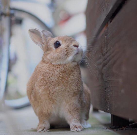 Bunny おしゃれまとめの人気アイデア Pinterest Mayara Alonso Caixeta かわいい ウサギ うさぎ
