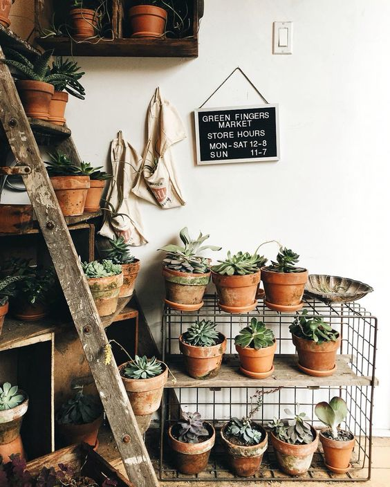 potted plants | indoor decor | minimal | hippy garden | small gardens | succulents