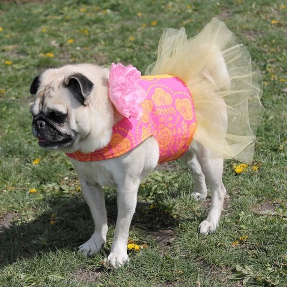 Pink Tangerine Dog Tutu need to find someone who can make my bulldog one of thesr
