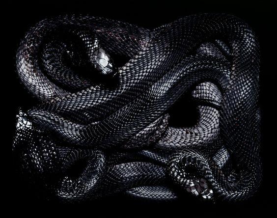 — Serpent