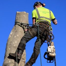 Having Trees Removed In Tampa #Tree_Service_Tampa #Tree_Service_Tampa_FL