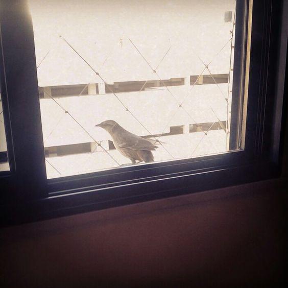 #bird #visita #esquadros #janela