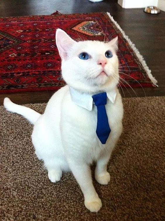 Disfraces para mascotas