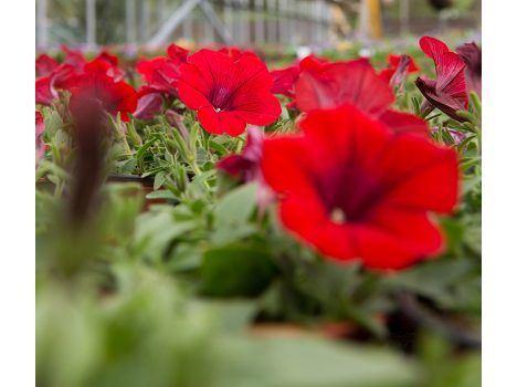 The Hollies Garden Centre, Cheshire - Plants blooming - hanging baskets, vegetable plants and much more.