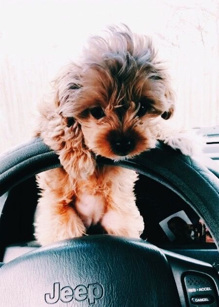Pin By Arolea Ramos On I Luv Animals Puppies Cute Funny Animals Cute Dogs