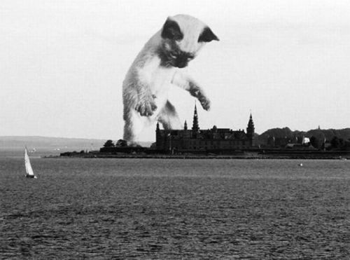 Meow-zilla
