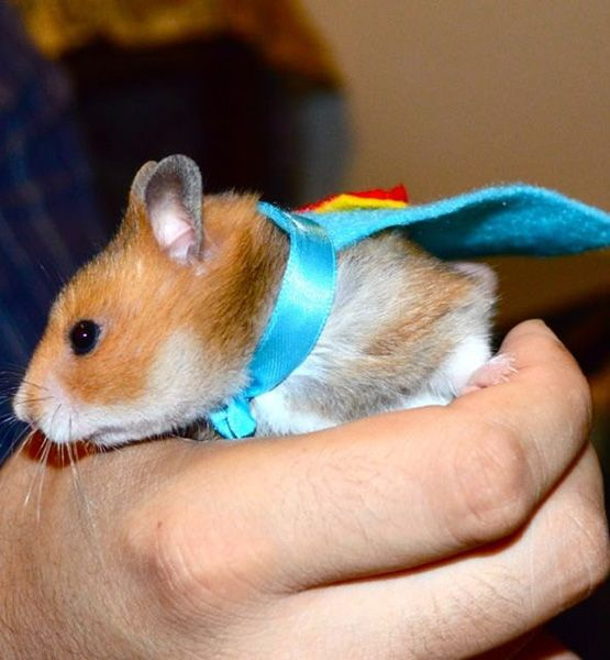 The 20 Best Halloween Pet Costumes - Ham It Up | Gallery | Glo