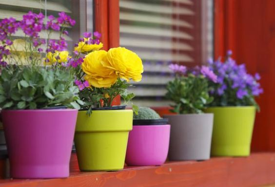 If a lack of space is keeping you from enjoying your favorite blooms, grow annuals and perennials on your porch, balcony, or windowsill.