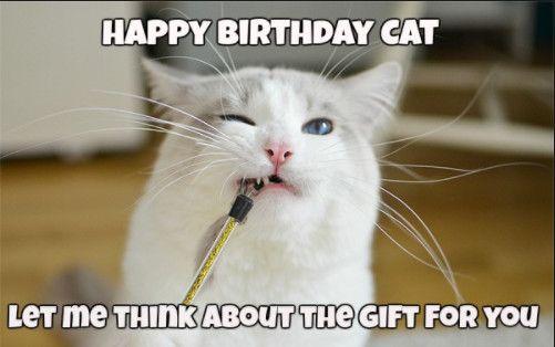 Best 25 Funny Happy Birthday Meme Birthday Meme Funny Memes Funny Happy Birthday Meme Happy Birthday Meme Happy Birthday Cat