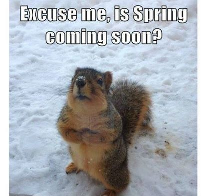 Image result for funny spring animal captions