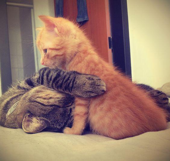 #cleópatra #tigresminha #cats
