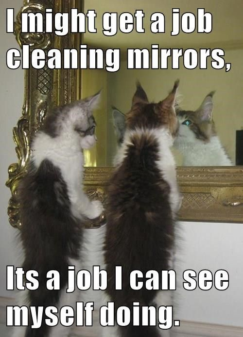 Top 22 Memes Of The Week Cheezburger Users Edition 63 Funny Cat Photos Funny Cats Funny Animals