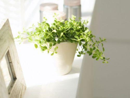lovely: House Plants, Green Garden, Home Garden Plants, Green Plants, Baby, Plants House