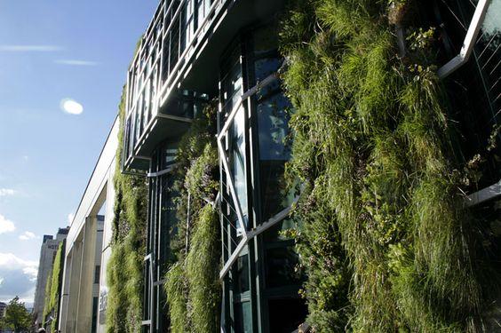 Ventanales cubiertos por el jardín vertical.