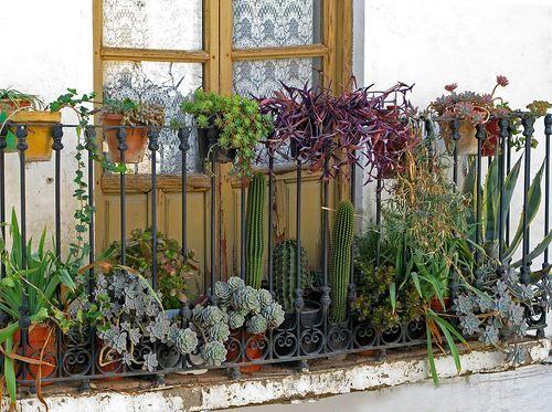 Succulent balcony garden