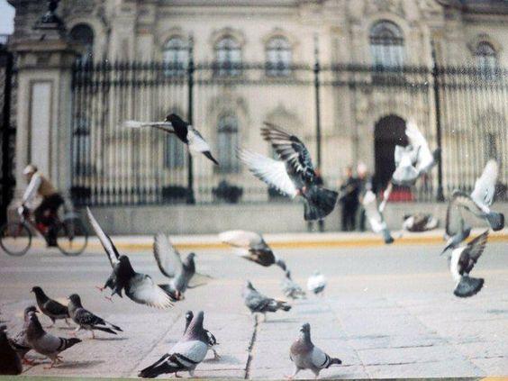 Palomas en palacio