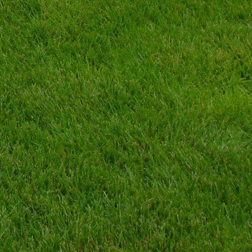 Zoysia Zeon Sod At Pike Nurseries Lawn Sod Seeding Lawn Nursery Landscape Design