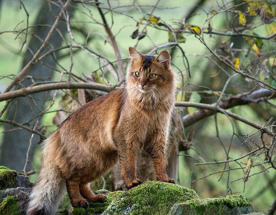 Resultado de imagen de gato asomali