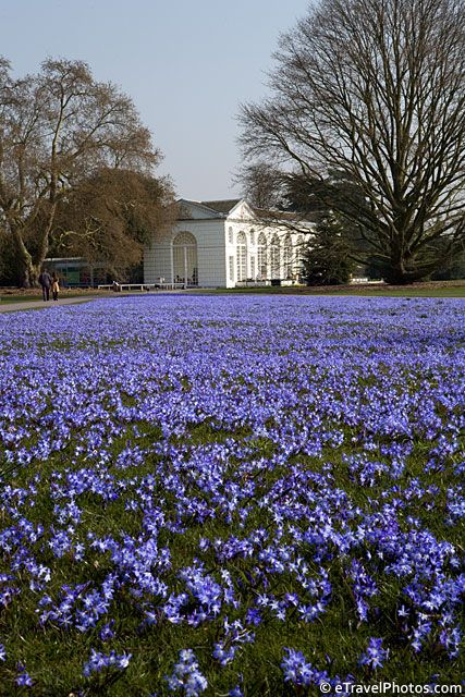 Kew Gardens, Surrey, England. The grandfather of all English gardens. If you're a garden lover, put it on your bucket list!
