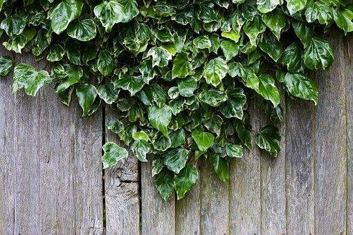 9 Magnetic Fencing Ideas Nz Ideas Front Yard Fence Easy Fence
