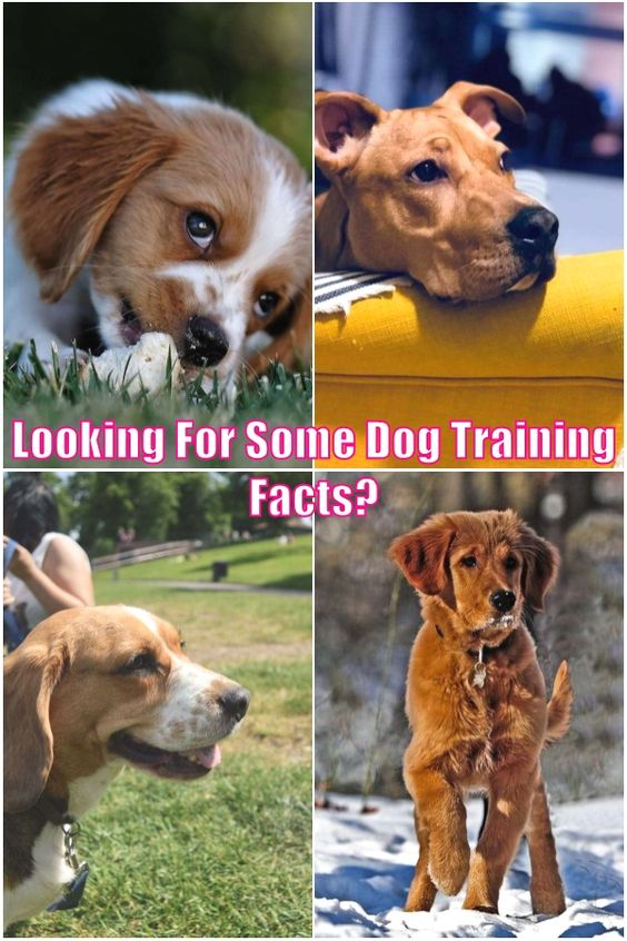 Training Your Cute Dog Tips And Tricks You Should Know In 2020 Training Your Dog Dogs Dog Training