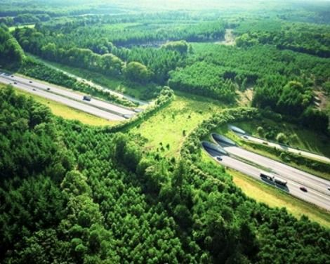 Bridge built solely for animals to cross highways safely - Highway A50, Netherlands.