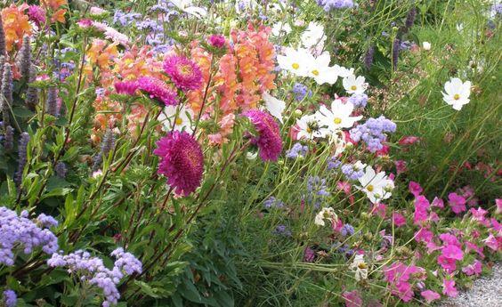 Einjährige Sommerblumen wie Löwenmaul und Schmuckkörbchen sind typisch für Bauerngärten. Sie müssen aber jedes Jahr neu ausgesät werden
