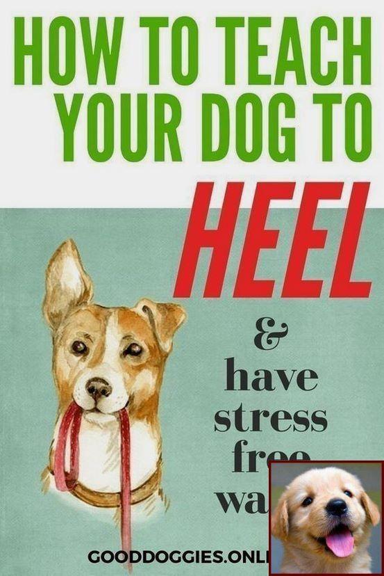 Dog Behavior School Near Me And Dog Behavior Assessment With Images Dog Training Dog Training Advice Dog Training Tips