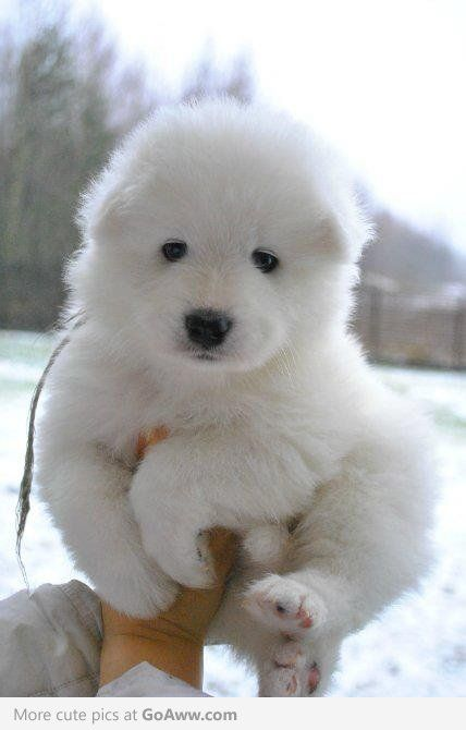 cute poofy puppy!