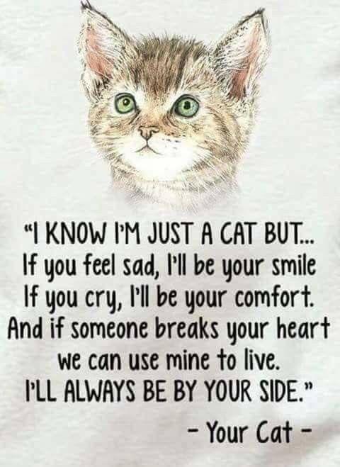 fd647d9cdd8a5485bf4f7eee3d211b55 - How Do You Get Your Cat To Like You