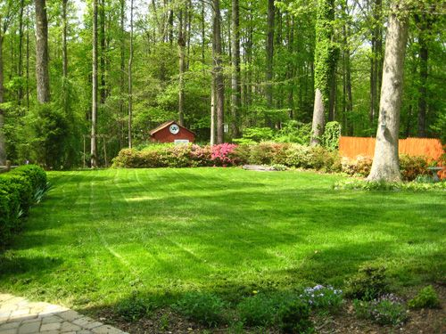 how to get lawn green and thick