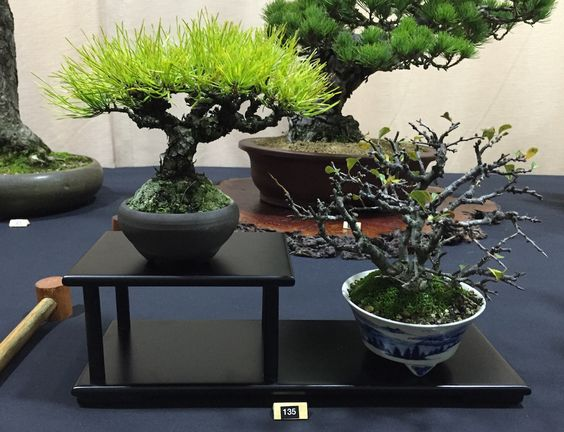 Shohin display_1