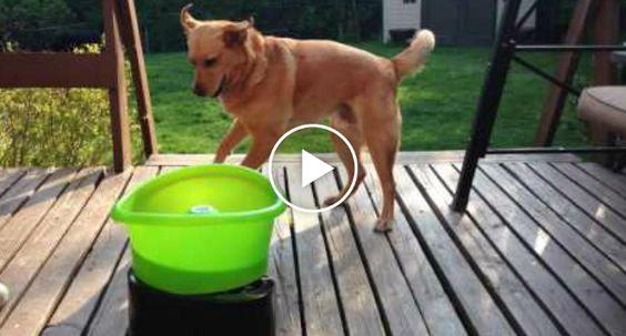 Cão Resgatado Mostra Toda a Sua Felicidade Com Novo Brinquedo http://www.funco.biz/cao-resgatado-mostra-toda-felicidade-novo-brinquedo/