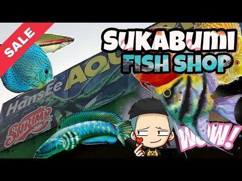Toko Ikan Hias Di Sukabumi Youtube Ikan Neon Hiasan