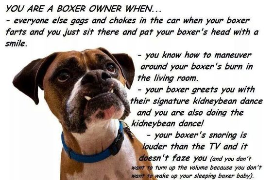 The life of a boxer owner.