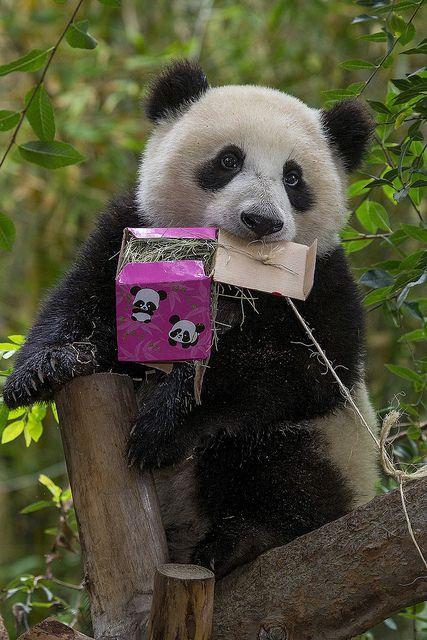 パンダ柄を咥えるパンダ